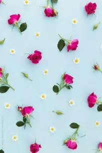Cute Summer Flowers Desktop Wallpaper