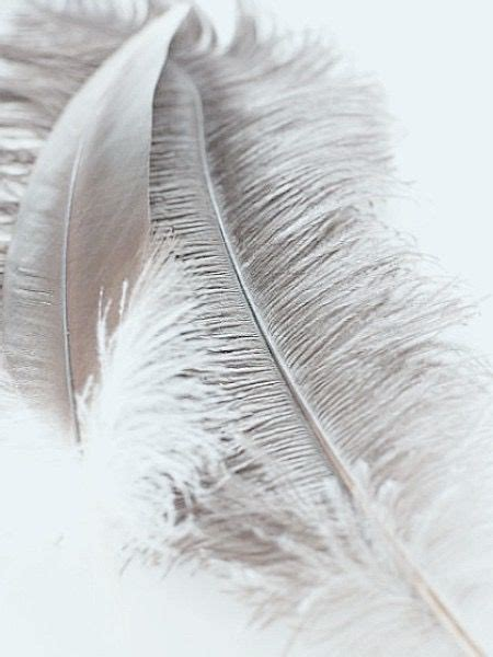 gray feathers white aesthetic gray aesthetic wallpaper backgrounds