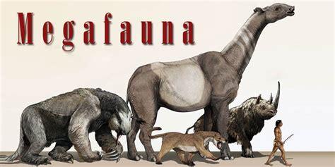 megafauna animals extinct america humans human australia dinoanimals such were species