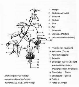 Bau Der Pflanze : pflanzen in nanopics aufbau einer pflanze ~ Lizthompson.info Haus und Dekorationen