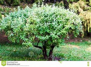 Kleiner Baum Garten : kleiner baum garten swalif ~ Lizthompson.info Haus und Dekorationen