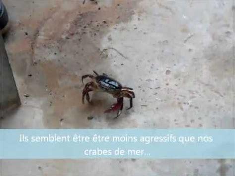 cuisiner le crabe crabe de mer hostzin com search engine
