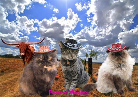 If you play this cat game, you'll understand what i mean what i say it is unfortunately addicting. Cowboy hat for dogs and cats