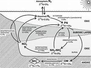 Schematic Illustration Showing A Simplified Nitrogen Cycle