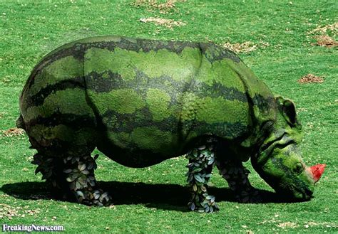 Plant  Animal Hybrids Pictures Gallery  Freaking News