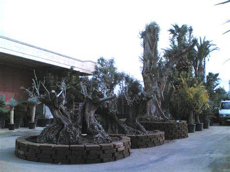 vasi per alberi tufo di roma ideale per elementi decorativi e fioriere nel