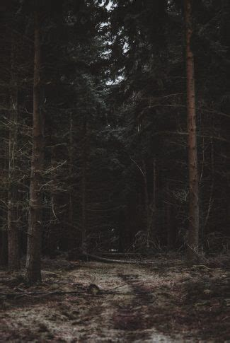 Are you looking for dark green forest wallpaper? Download A Dark Forest Wallpaper | CellularNews