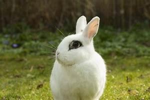 Was Ist Ein Widder : mi conejo pierde mucho pelo causas y soluciones ~ Eleganceandgraceweddings.com Haus und Dekorationen