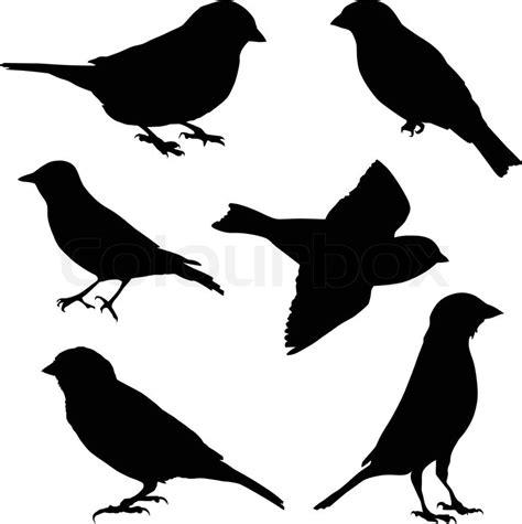 set  vector images sparrow stock vector colourbox