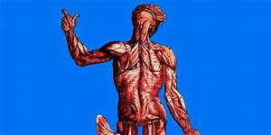 The Human Body  15 Things You Didn U0026 39 T Know  Part 1