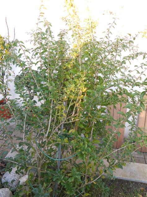 Maliny cenník, zahradníctvo klívia