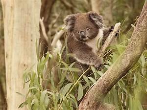 Wildlife Viewing  Nature And Wildlife  Phillip Island
