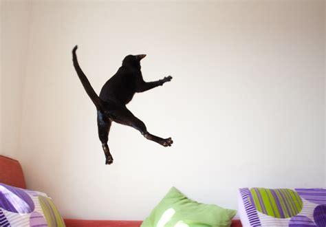 Cat Jumping Really High
