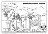 Rainforest Animals Coloring Ecosystem Pages Bing Wealth Jungle Forest Trees Draw Plants Habitat Daintree Ac Activities sketch template