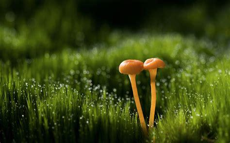 Mushroom Hd Wallpaper