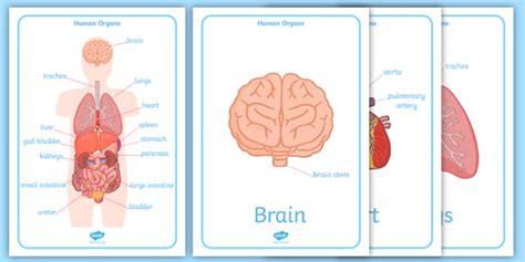 circulatory system interactive