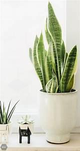 Online Pflanzen Kaufen : pflanzen online shop with pflanzen online shop simple online shop grosse kaufen auf rechnung ~ Watch28wear.com Haus und Dekorationen