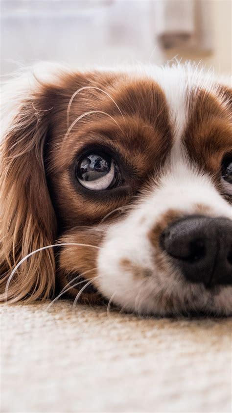 wallpaper puppy funny animals  animals