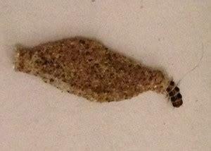 case bearing moth larva whats  bug