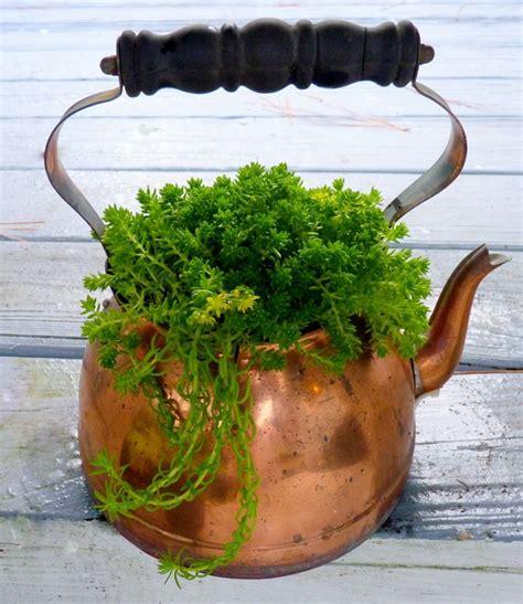 diy home staging tips plants container plants  tea pots
