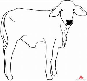 Out Line Drawing Of Animals Cow Calf Outline Drawing ...