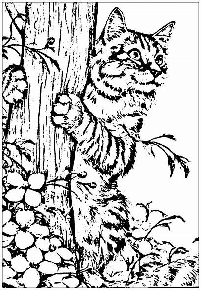 Coloring Cat Cats Realistic Pages Printable Adults