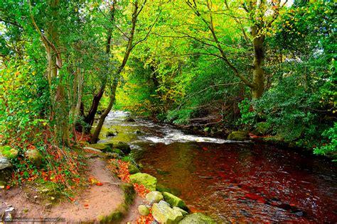 support bureau tlcharger fond d 39 ecran rivière forêt arbres route fonds