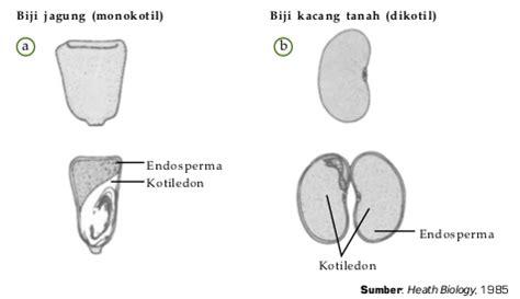 tumbuhan biji tertutup angiospermae klasifikasi sifat