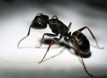 Ameisenbekämpfung München  Schädlingsbekämpfung Schemeth