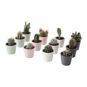 Pflanze Mit S : cactaceae pflanze mit bertopf ikea ~ Orissabook.com Haus und Dekorationen
