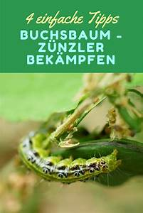 Buxbaum Raupen Bekämpfen : 4 wirksame tipps gegen buchsbaum raupen buchsbaumz nsler ~ A.2002-acura-tl-radio.info Haus und Dekorationen
