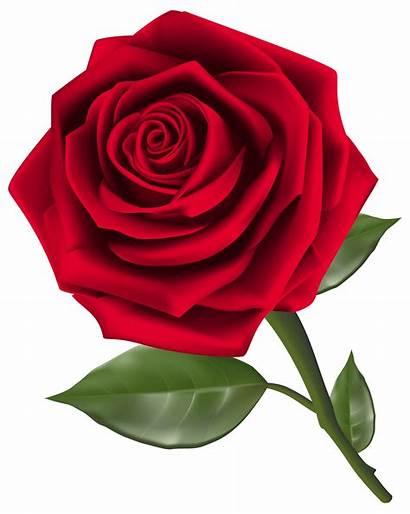 Rose Clipart Flowers Transparent Roses Clip Flower