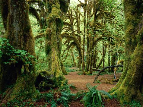 photographs  beautiful dense tropical forests cool
