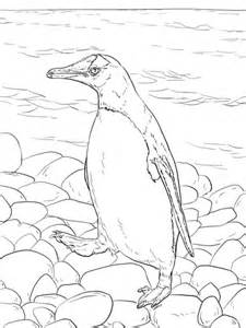 gentoo penguin walks coloring page supercoloringcom