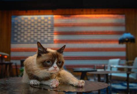 Grumpy Cat And Oskar The Blind Cat Make A Purrfect Match