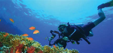 scuba diving barbados pocket guide