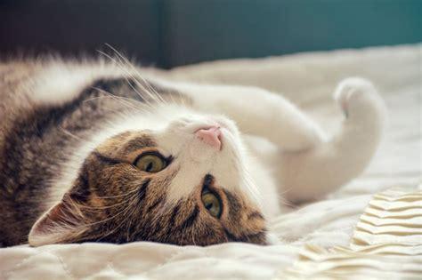 frasi portano fortuna frasi sui gatti