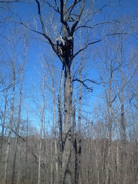 display mystery treestands