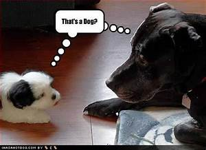 HD Animals: funny pictures of dogs with captions