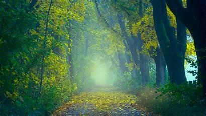 Forest 5k Foggy Autumn Wallpapers Hdwallpaperslife
