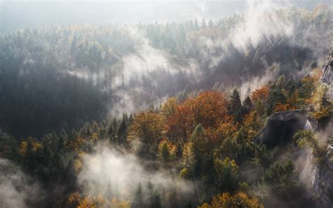wallpaper forest fog trees woods  nature