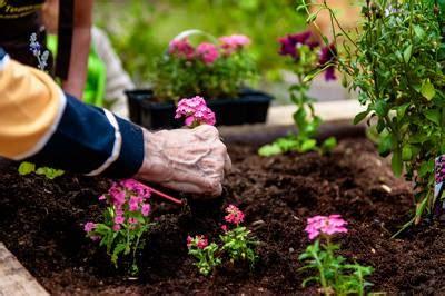 montpellier jardins adapt 233 s tous les lundi de 10h00 224 11h30 maison pour tous melina