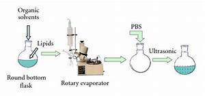 Preparation Of Liposomes Using Rotary Evaporator