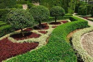 formal evergreen trees small ornamental trees in formal gardens gardening landscaping