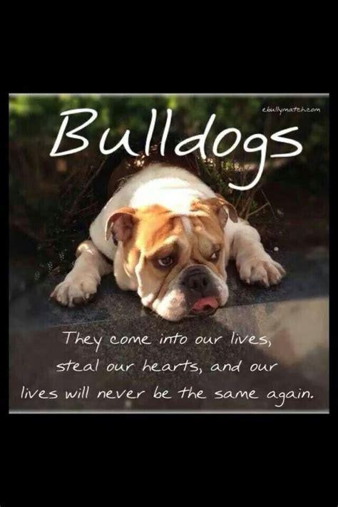 trueour lives     english bulldogs
