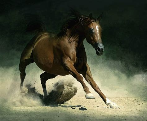andalusian horse arab friends