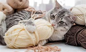 Verkleidung Für Katzen : 14 gefahren f r katzen im haushalt ~ Frokenaadalensverden.com Haus und Dekorationen