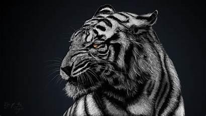 Tiger Background Animal