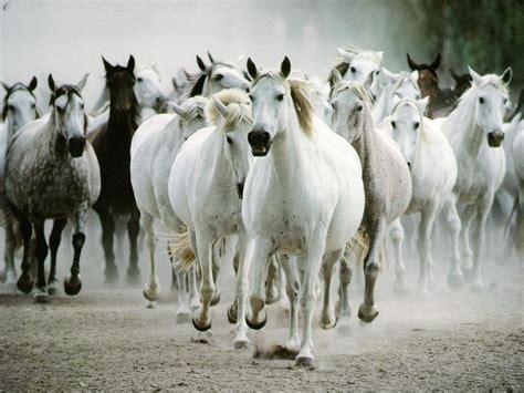 cuisiniste guing infos sur les chevaux