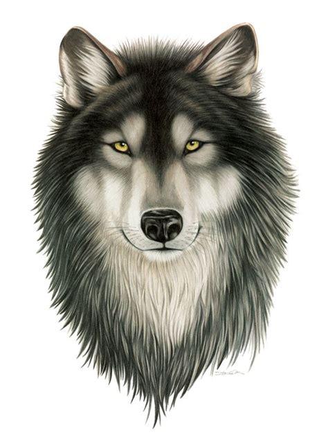wildlife illustration  stefanie clark  behance